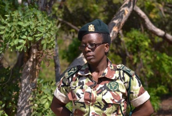In Malawi 11 percent of rangers across the country are women, but efforts are under way to increase gender diversity. Trace Banda is one of just 52 female field rangers in Malawi [Rabson Kondowe/Al Jazeera] Kasungu, Malawi –Trace Banda stands outside the rangers' camp carrying an M-16 assault rifle as she prepares for an anti-poaching […]