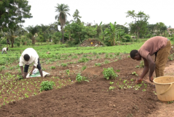 Government says it is rolling out measures to digitize the distribution of fertilizer in the country. In recent times fertilizer smuggling has become the order of the day as the Planting for Food and Jobs Secretariat reported that the country lost a whopping GHS120 million from unaccounted for fertilizer, diversion of coupons and fertilizer smuggling […]